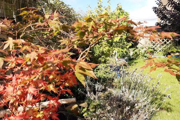A garden in autumn